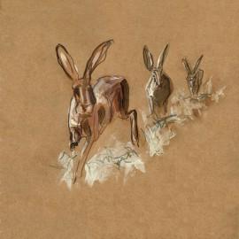 running_hare_C0094