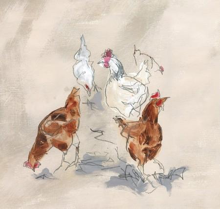 scratching_chickens_C0082